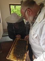 včely_14