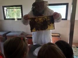 včely_1