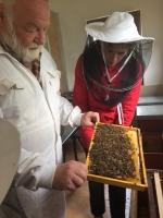 včely_2